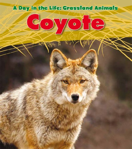 Coyote (A Day in the Life: Grassland Animals) by Brand: Heinemann