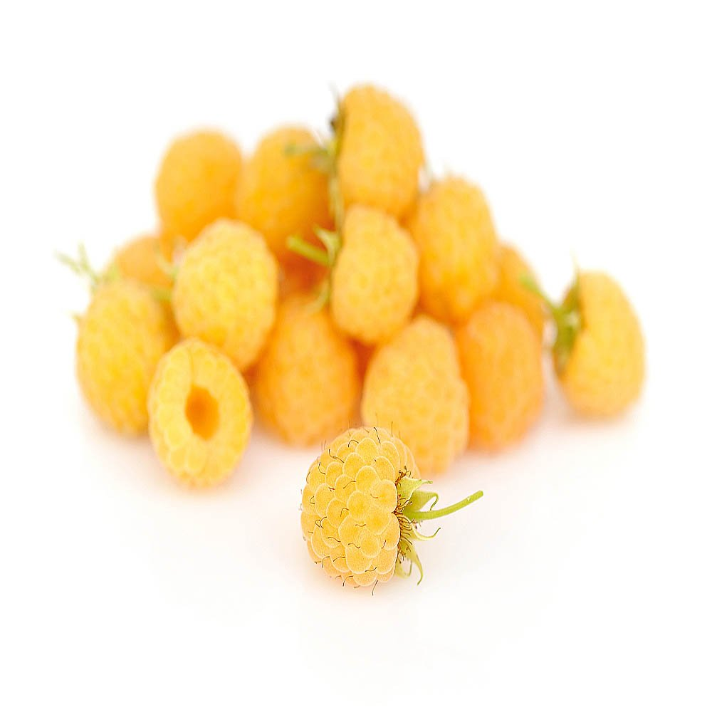 Anne Golden Raspberry Plants-Bare Root Canes–Sweet Tropical Flavor-Certified Disease & Virus Free- (5 Canes)