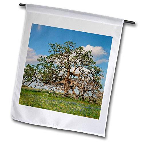 3dRose Danita Delimont - Trees - Live Oak, Atascosa County, Texas - 18 x 27 inch Garden Flag (fl_315062_2) ()