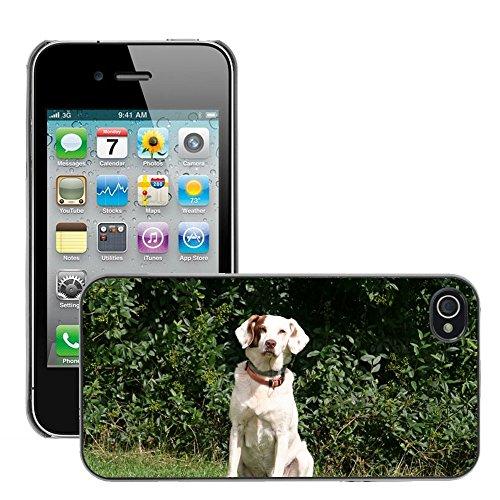 Bild Hart Handy Schwarz Schutz Case Cover Schale Etui // M00135388 Hund Tier Haustier Weiß // Apple iPhone 4 4S 4G