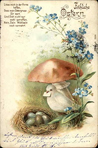 White Dove Bearing Letter with her Nest of Lovely Eggs With Other Animals Original Vintage Postcard from CardCow Vintage Postcards