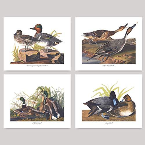 (Set of 4) Dabbling Duck Prints (Audubon Bird Art, Home Wall Decor) Mallard Green Winged Teal Scaup Pin Tail - Unframed -