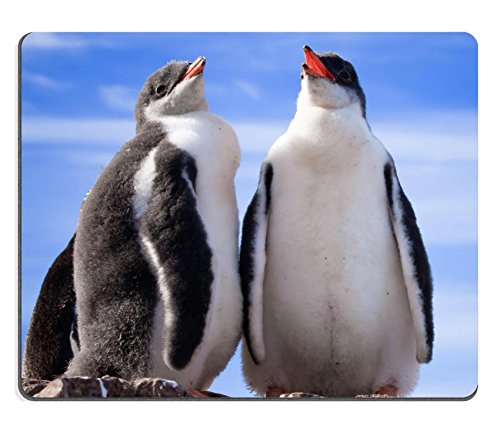 msd-natural-rubber-mousepad-image-id-8479736-two-penguins-in-antarctica