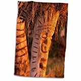 3D Rose Coconut Palm Carved into Tikis Hawaii-Us12 Dpb0026-Douglas Peebles Hand/Sports Towel, 15 x 22