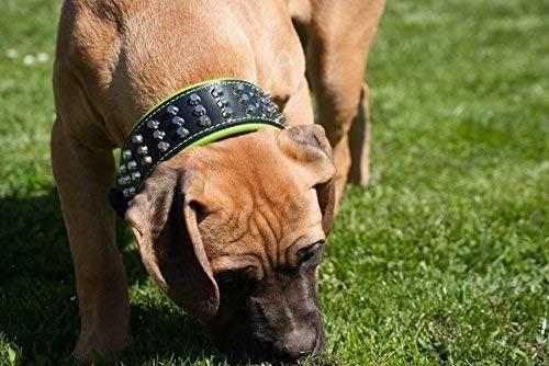 Bestia  Star  Collare per Cani in Vera Pelle con Borchie