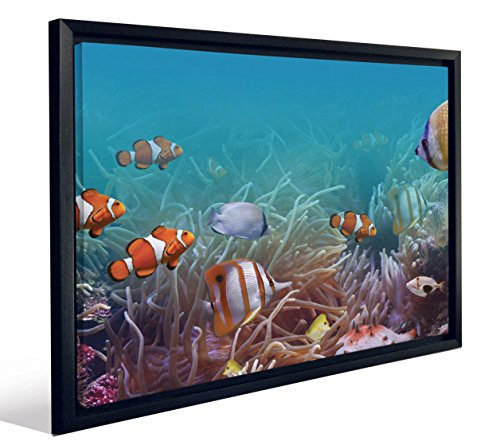 JP Londres fcnv2003colorido Nemo Angelfish Clownfish Acuario Framed Art Wall Decor, 51,7x 67x 3,2cm