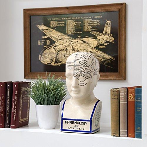Phrenology Head Bust, Large, Gloss White ()