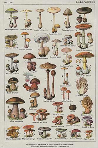 Vintage French Mushroom Chart poster Collectors exotic specialty