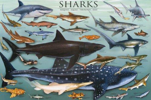 Sharks Underwater Educational Chart Poster Education Print