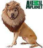 California Costume Collections Animal Planet Lion Dog Costume, Medium