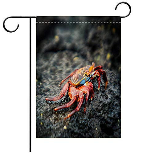 BEICICI Double Sided Premium Garden Flag Sally Lightfoot Crab Bartolome Island, Galapagos Best for Party Yard and Home Outdoor Decor