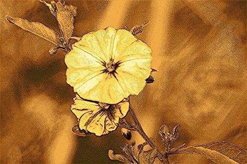 Laminated Poster Vintage Flower Print Flowers