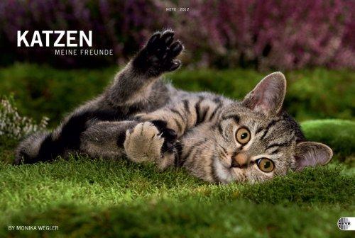 Katzen. Meine Freunde 2012