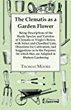 Amazon / Macnutt Press: The Clematis as a Garden Flower - Being Descriptions of the Hardy Species and Varieties of Clematis or Virgin s Bower (Thomas Moore)