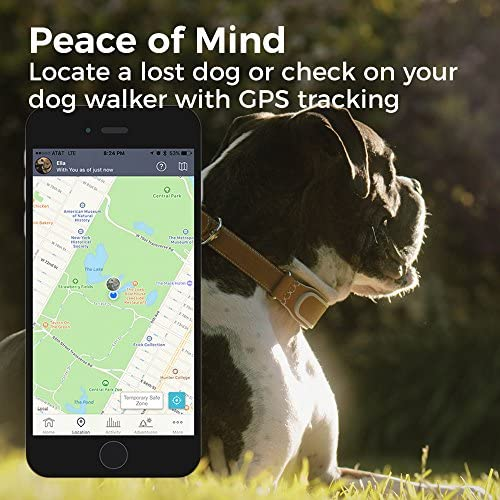 GPS Location Tracker KITTN01 and More LINK AKC Smart Dog Collar ...