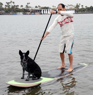Better Surf…than Sorry Paddle with Your Dog Pup Deck SUP Traction Pad for Dogs Stand Up Paddleboard Deck Padding…