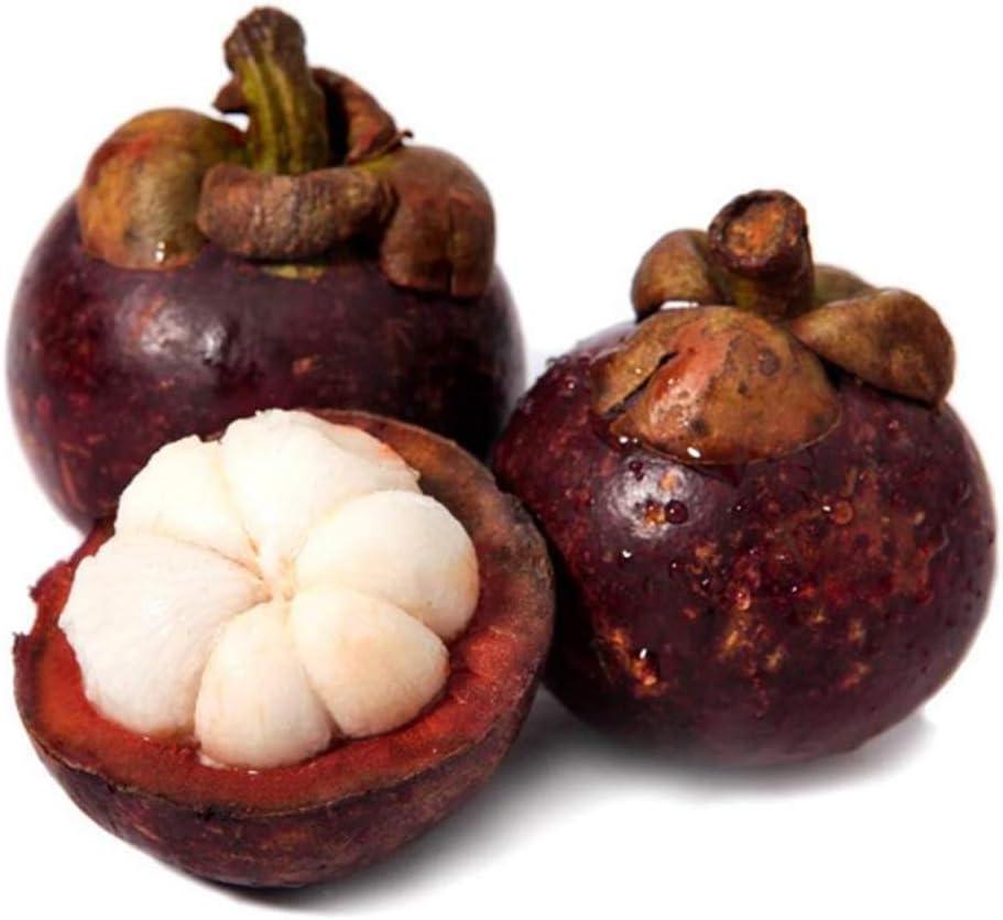 20pcs Semillas de Mangostán, Semillas de Frutas Raras Fruta de ...