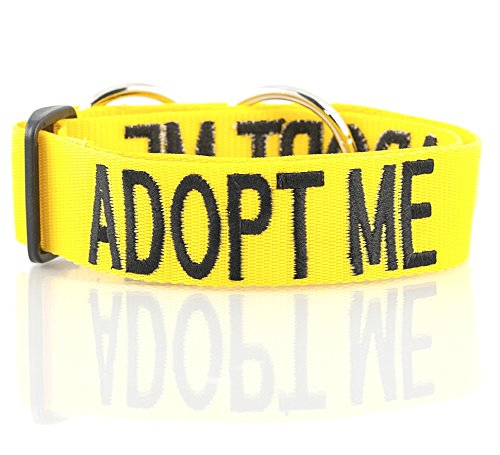 (ADOPT ME Yellow Color Coded L-XXL Semi-Choke Dog Collar (Needs A Home) Donate To Your Local Charity)