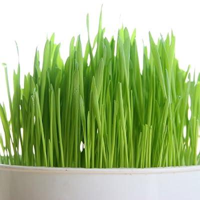 PowerGrow Systems Certified Organic Non-GMO Wheatgrass Seeds - 1 LB Wheat Seed - Guaranteed to Grow : Garden & Outdoor