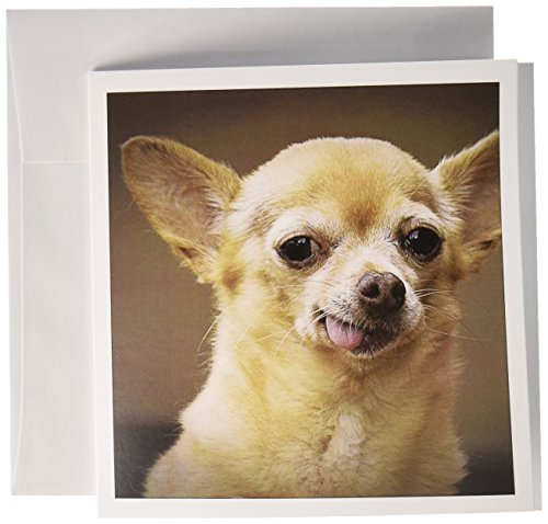 Toothless Chihuahua Dog, Santa Fe, New Mexico - Greeting Card, 6 x 6 inches, single (gc_92682_5)