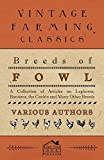 Breeds of Fowl - A Collection of Articles on Leghorns, Bantams, the Cochin and Many Other Breeds
