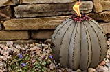Jur_Global Small Golden Barrel Cactus with Torch