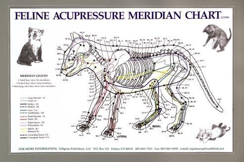 Feline Acupressure Meridians (Chart Anatomy Feline)