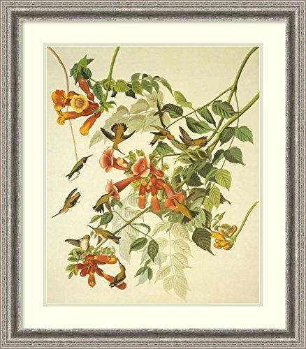 Framed Art Print 'Ruby-Throated Hummingbird' by John James Audubon (Ruby Rectangular Vase)