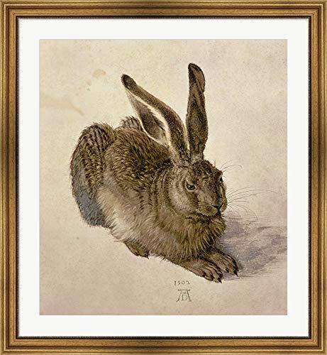 Young Hare, c.1502 by Albrecht Durer Framed Art Print Wall Picture, Wide Gold Frame, 35 x 38 inches