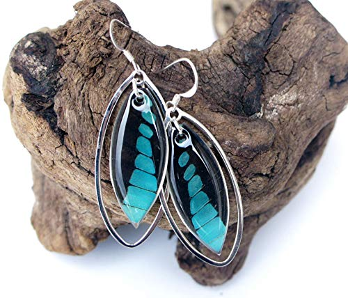Real Graphium Milon Butterfly Wing Earrings in Sterling Silver - Insect Jewelry