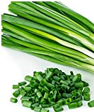 Organic Evergreen Long White Bunching Onion 200 Seeds By Jays Seeds