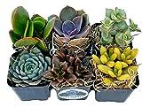 Fat Plants San Diego Succulent Plants (6)