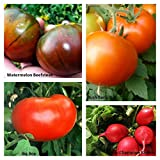 Bulk 3 Tomato Seeds - 625+ Seeds - Organic - DH Seeds - UPC0742137106513 - Plant Markers Included.