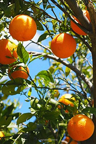 Read Online A View of Oranges Hanging on a Tree at Sunset in Israel Journal: 150 Page Lined Notebook/Diary pdf