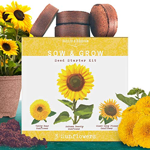 Nature's Blossom Sunflower Growing Kit - Grow 3 Types of Sunflowers from Organic Flower Seeds - A Complete Gardening Starter Set Including All You Need to Start Your Own Sunflowers Garden.