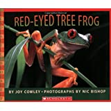 Red-eyed Tree Frog (Rise and Shine)