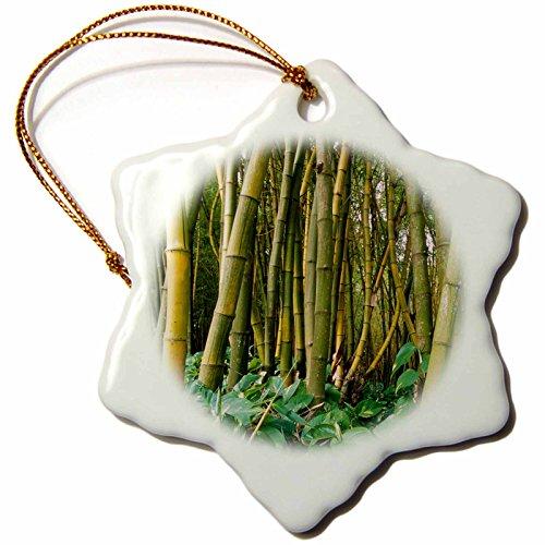 3dRose Bamboo Grove, Allerton Garden, Kauai, Hawaii, USA Snowflake Ornament, 3'' by 3dRose