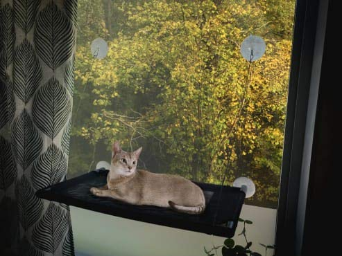Junglecatt Cat Window Perch. Best Cat Window Perch Hammock with Extra Strong Suction Cups.