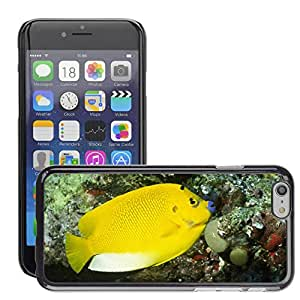 Hot Style Cell Phone PC Hard Case Cover // M00046608 animals islands apolemichthys angelfish // Apple iPhone 6 PLUS 5.5