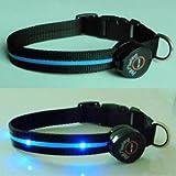 Dog Collar with Blue LED Lights, Multi-Function, Medium