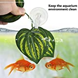 SLSON 4 Pack Fishes Veggie Seaweed Plant Suction