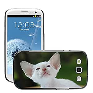 Super Stella Slim PC Hard Case Cover Skin Armor Shell Protection // M00145488 Siamese Cat Cat Kitten Cat Baby Fur // Samsung Galaxy S3 S III SIII i9300