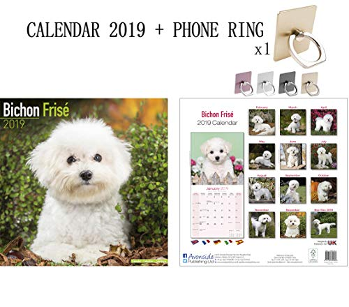 Bichon Frise Square Wall Calendar 2019 + Phone Ring Metal Stand Holder for All Mobile Phone - Bichon Frise Calendar Holder