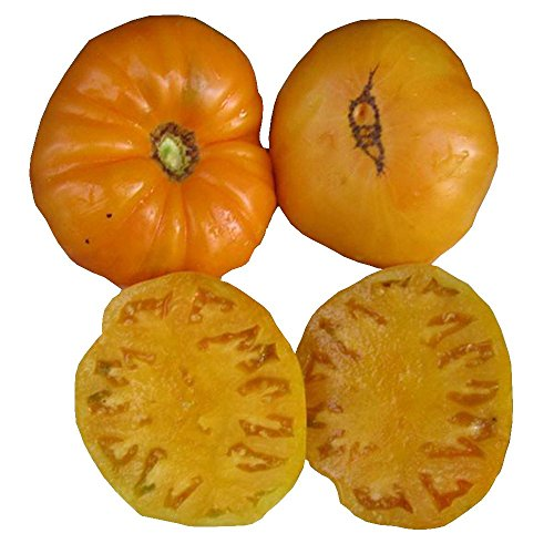 (KBX Tomato Seeds by Pepper Joe's - 20+ Tomato Seeds Per Pack)