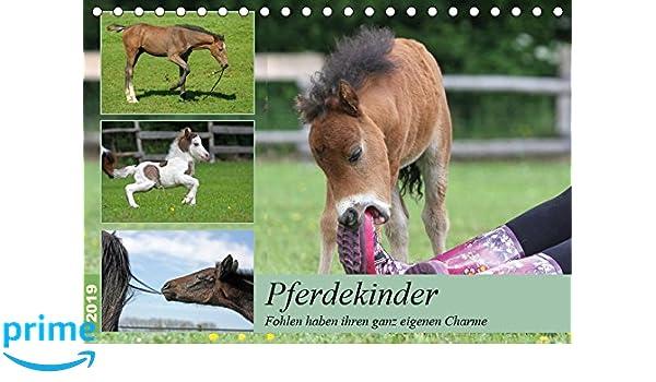 Pferdekinder - Fohlen haben ihren ganz eigenen Charme ...
