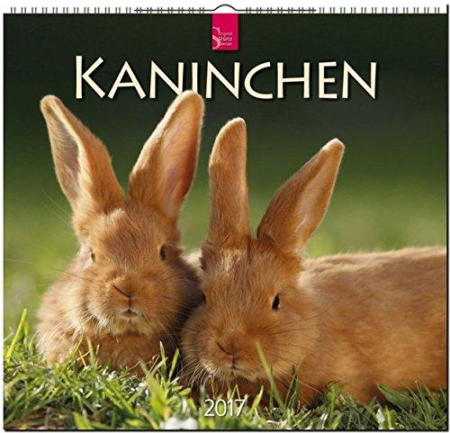 KANINCHEN - Original Stürtz-Kalender 2017 - Mittelformat-Kalender 33 x 31 cm