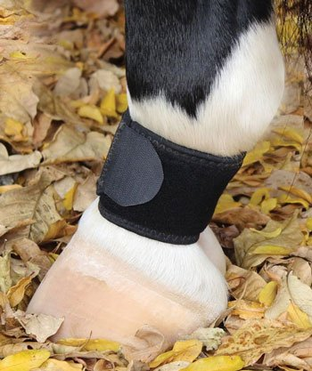 Pastern Wraps (Professionals Choice VenTECH Pastern Wraps Black)