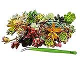 TWEEZERS FOR SUCCULENTS,Succulents, Cactus and