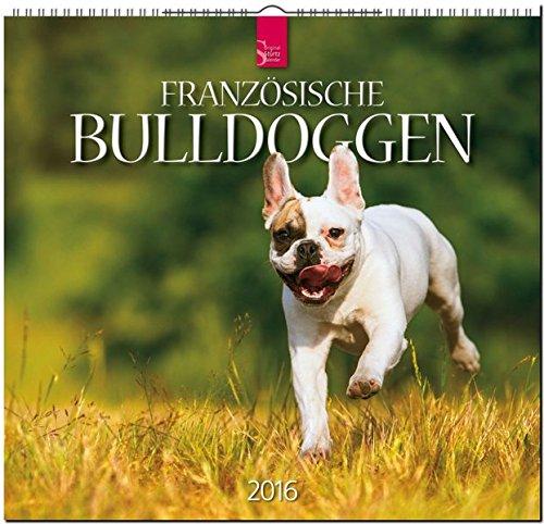 franzsische-bulldoggen-2016-original-strtz-kalender-mittelformat-kalender-33-x-31-cm-spiralbindung
