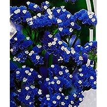 Flower Seeds Wavyleaf Sea-Lavender Blue (Limonium sinuatum) Organic Flowers Seed